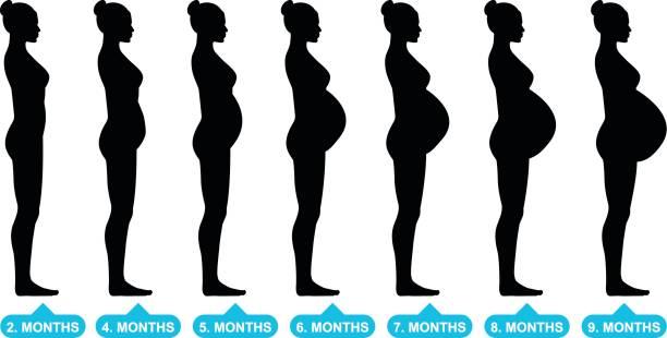 ilustraciones, imágenes clip art, dibujos animados e iconos de stock de siluetas mujer embarazadas - embarazada
