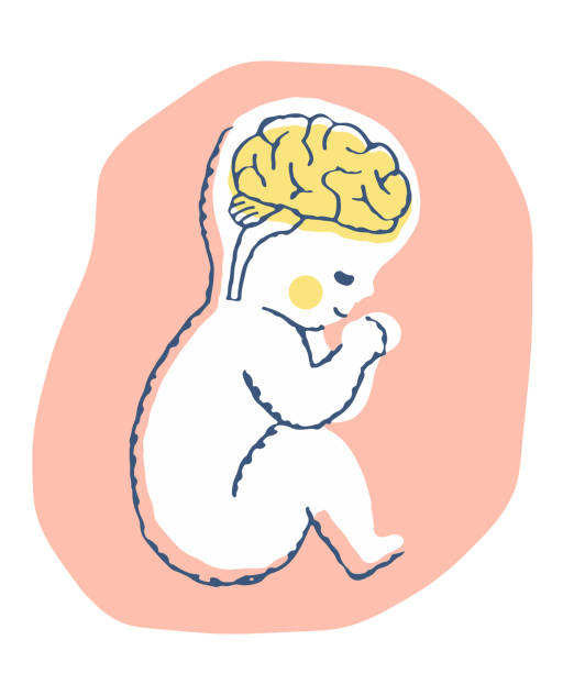 Pregnant n baby brain Parenting, growth, pose, infant, Pediatric, brain, medical, corpus callosum stock illustrations