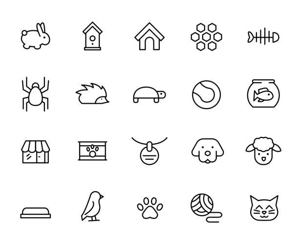 stockillustraties, clipart, cartoons en iconen met premium set van huisdier lijn pictogrammen - chicken bird in box
