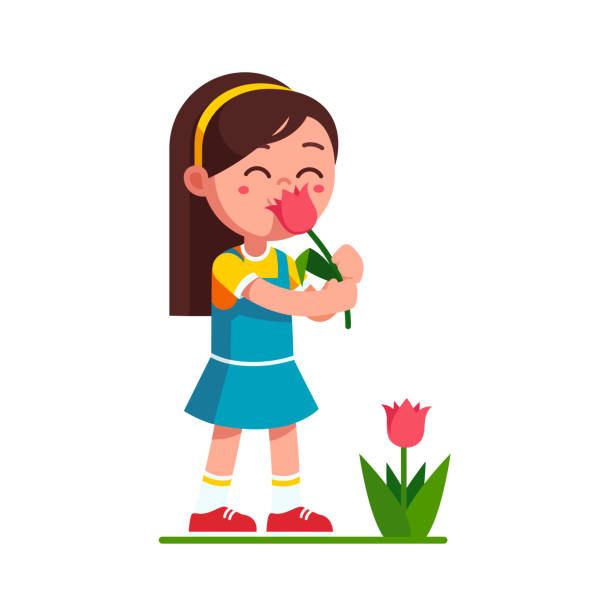 Preschool girl kid holding tulip flower smelling and enjoying aroma smell. Cartoon child character flat vector clipart illustration. Preschool girl kid holding tulip flower and smelling it. Child girl enjoying flower aroma smell. Serene cartoon kid character. Flat style vector illustration isolated on white background. scented stock illustrations