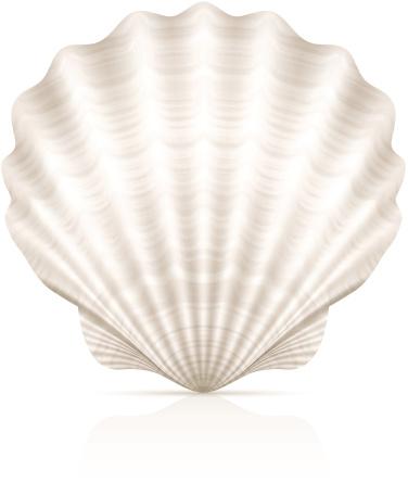 A pretty white seashell on a white background