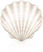 Vector seashells.