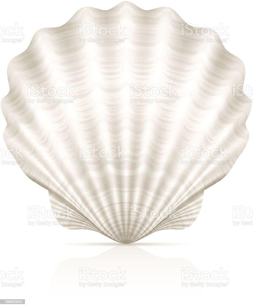 A pretty white seashell on a white background vector art illustration