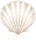 A pretty white seashell on a white background