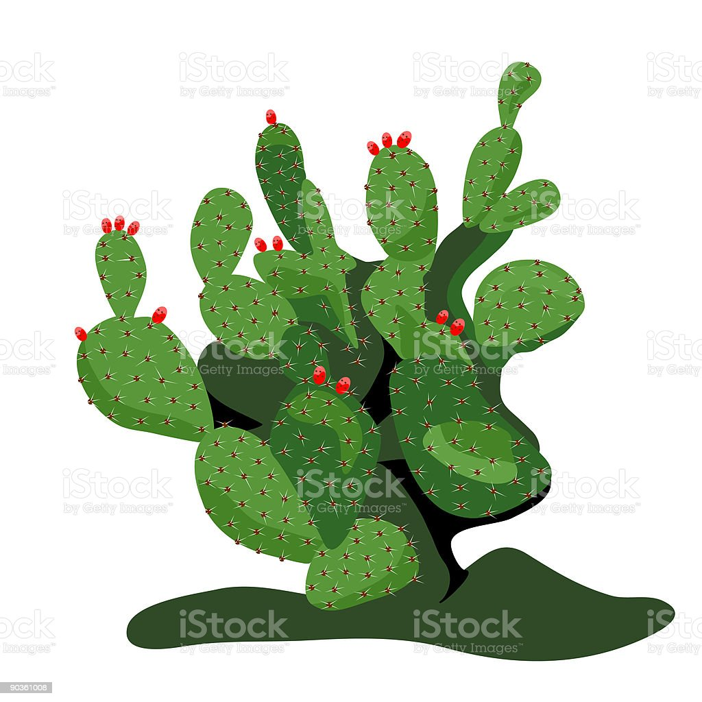 Prickly green pear cactus plant royalty-free stock vector art