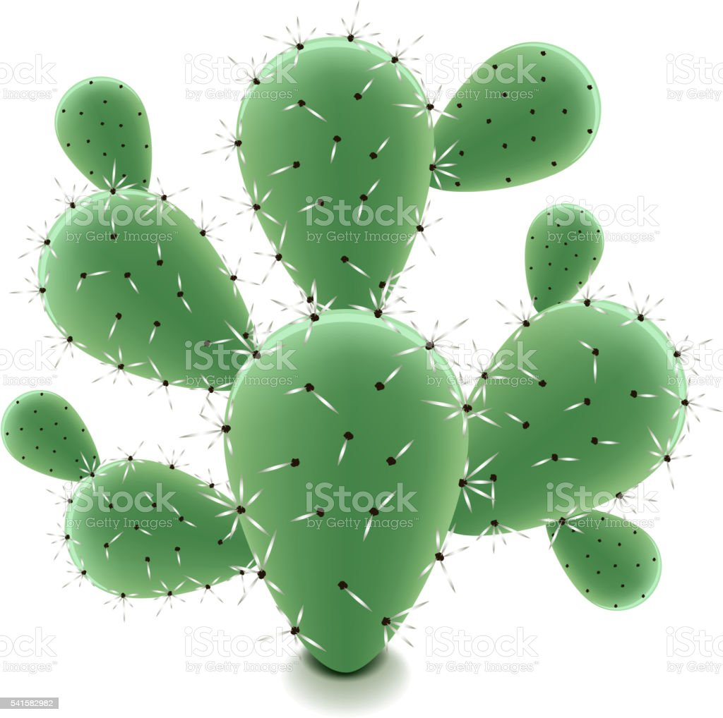 royalty free prickly pear cactus clip art vector images