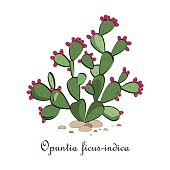 Free Prickly Pear Clipart and Vector Graphics - Clipart.me