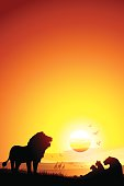 Pride of African Lions in savanna silhouettes safari at the sunset.