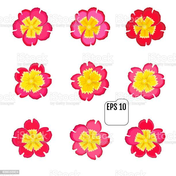 Primula flowers on white background spring primroses blooms vector id636033924?b=1&k=6&m=636033924&s=612x612&h=wiebmh4jzf2jmprtvjs34souai6km016n ohdxdsth4=