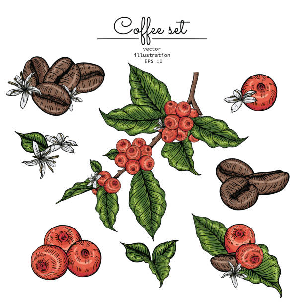 print - ziarno kawy palonej stock illustrations