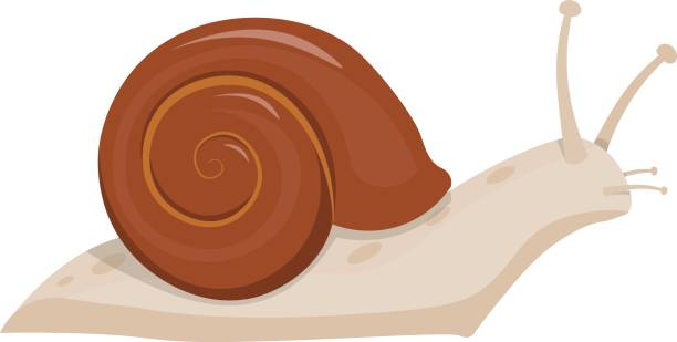 print - snail stock illustrations