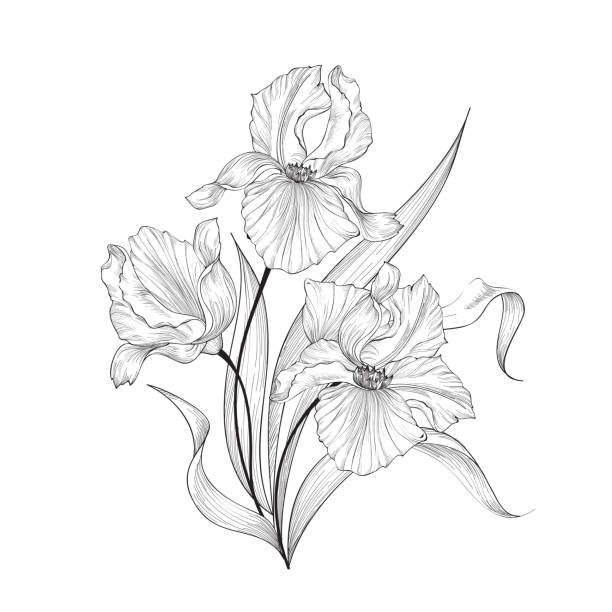 Print Floral bouquet with flower iris. Vintage Fourish Greeting Card Design. Swirl flower posy engraving border. Floral etching background iris plant stock illustrations