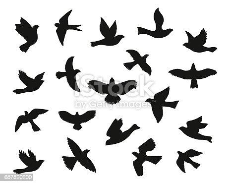 Set of bird flying silhouettes. Vector illustration.