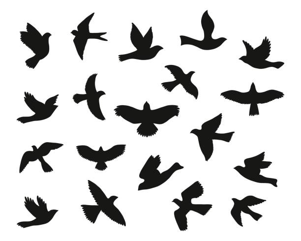 print - birds stock illustrations