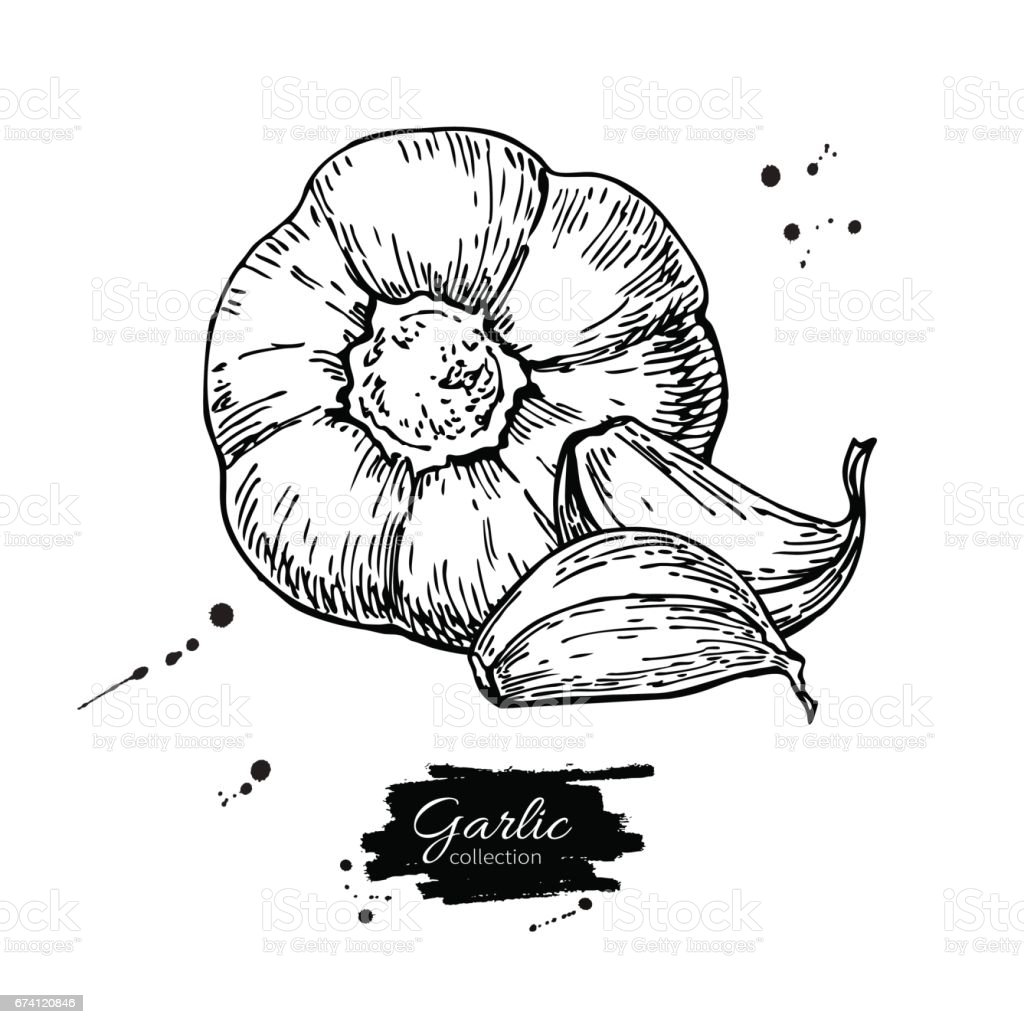 Print royalty-free print stock vector art & more images of agriculture