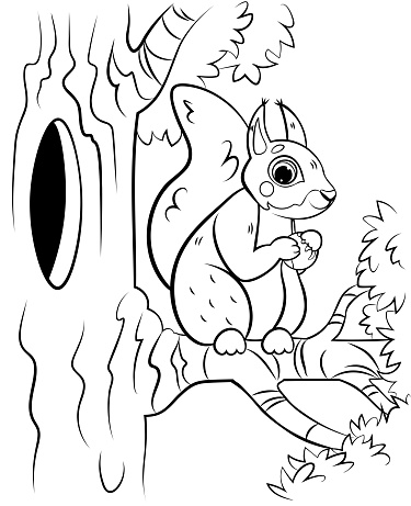 Printable coloring page outline of cute cartoon squirrel on tree with hazelnut. Vector image with forest background. Coloring book of forest wild animals for kids.