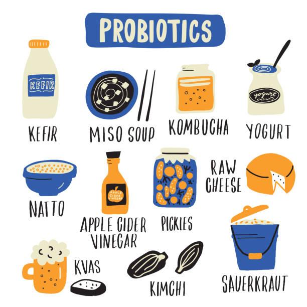ilustraciones, imágenes clip art, dibujos animados e iconos de stock de conjunto de alimentos probióticos. illlustration dibujado a mano en estilo doodle. vector - kéfir