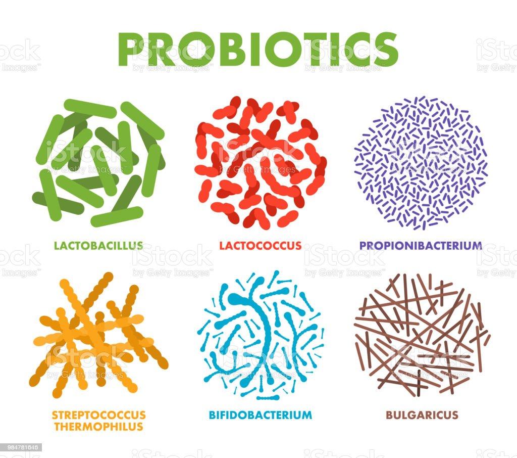Probiotics. Good bacteria and microorganisms for human health. Microscopic probiotics, good bacterial flora vector art illustration