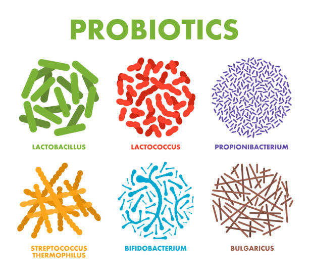 Probiotics. Good bacteria and microorganisms for human health. Microscopic probiotics, good bacterial flora Probiotics. Good bacteria and microorganisms for human health. Microscopic probiotics, good bacterial flora. Vector lactobacillus stock illustrations