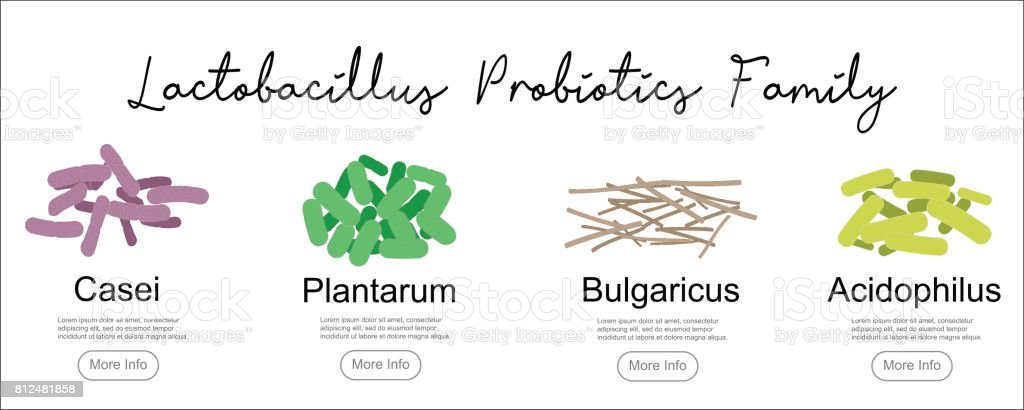 Diagram Of Lactobacillus Bacteria Auto Electrical Wiring Diagram