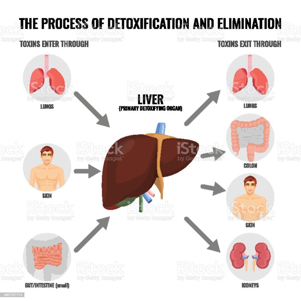 Process of detoxification and elimination cartoon medical poster vector art illustration