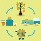 Orange fruit production steps. Orange tree, harvest, transport, sale at the grocery store, production of orange juice at home. In a circular scheme.