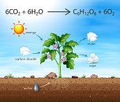 A Process of Tree Produce Oxygen