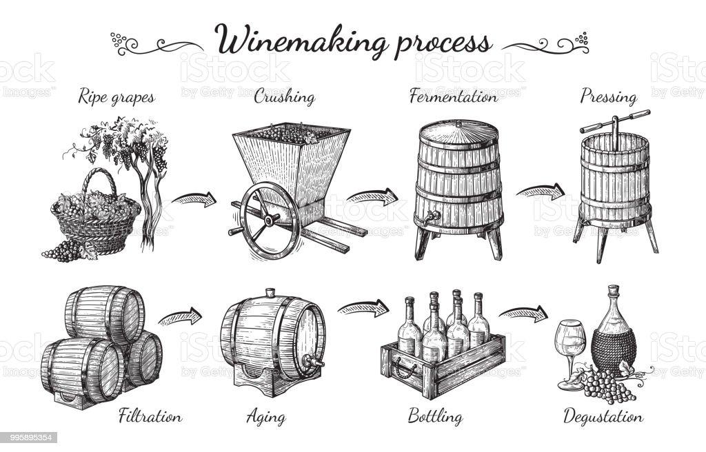 proces van wijnproductie - Royalty-free Achtergrond - Thema vectorkunst