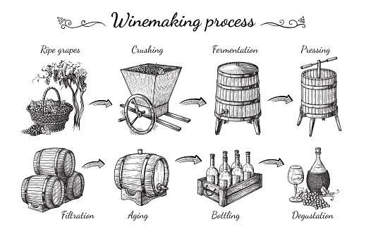 Proces Van Wijnproductie Stockvectorkunst en meer beelden van Achtergrond - Thema