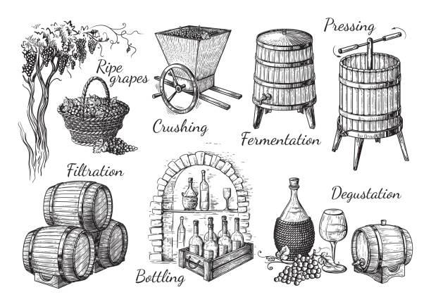 process of wine production vector art illustration