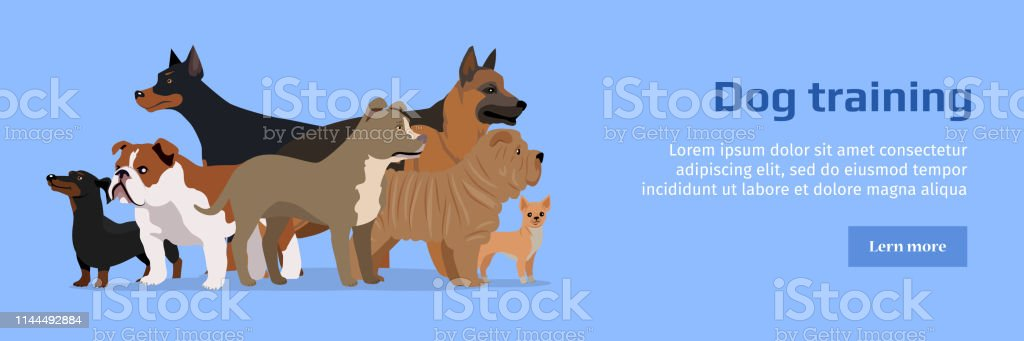 Professional dog training banner. Group of different breeds dogs on...