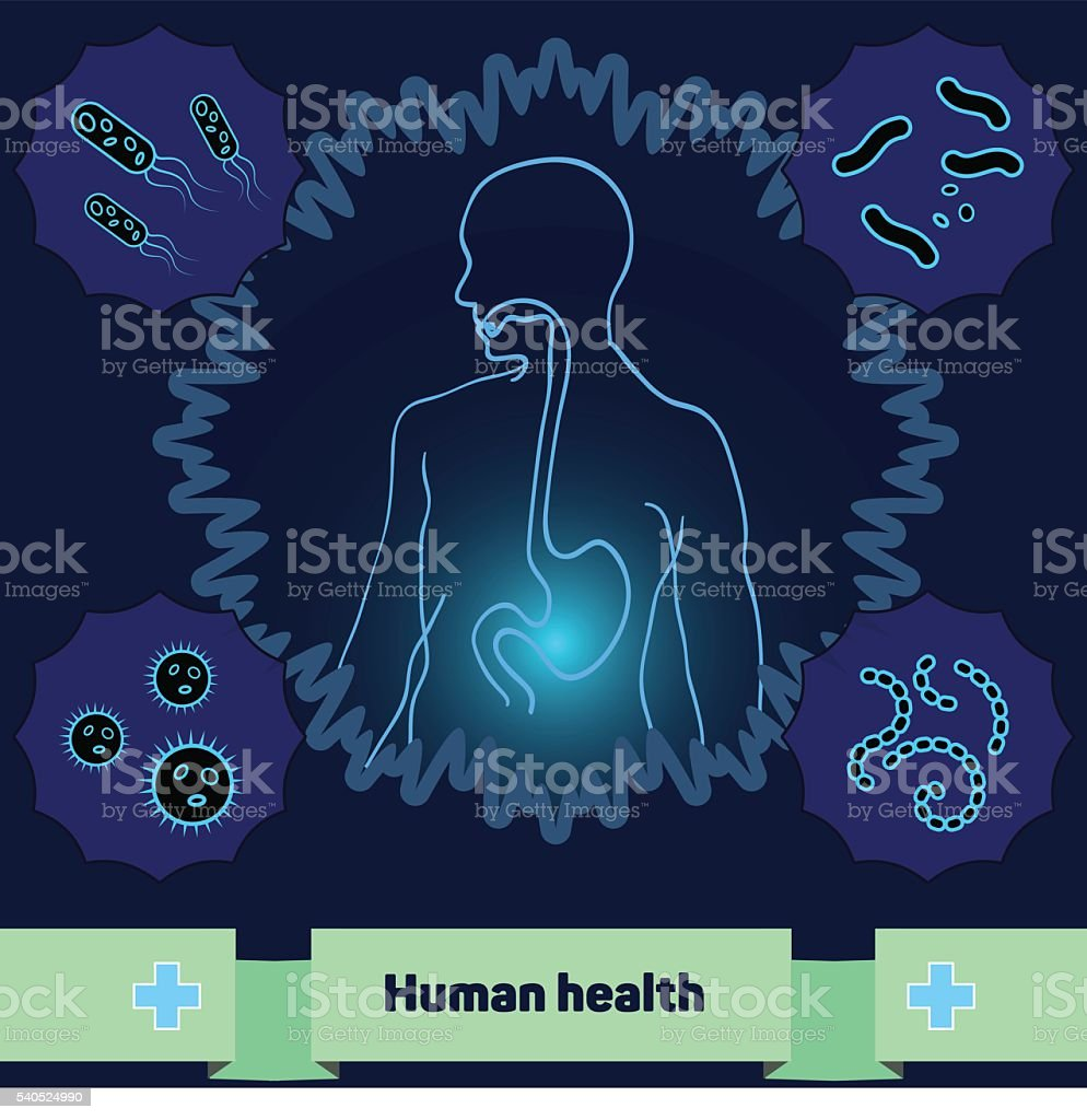 Protection of body against harmful bacteria, a healthy stomach vector art illustration