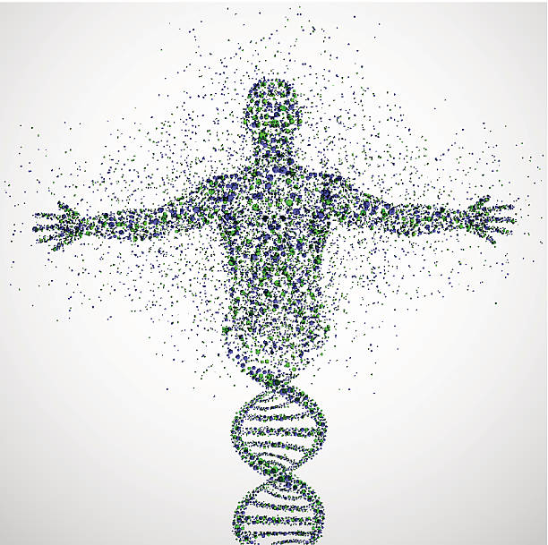 Prototype of man Abstract model of man of DNA molecule. Eps 10 genetic research stock illustrations