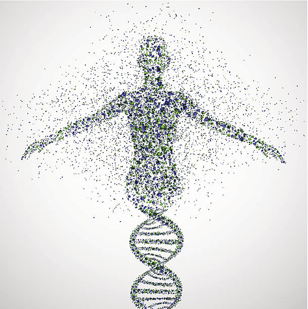 Prototype of women Abstract model of woman of DNA molecule. Illustration contains transparency and blending effects, Eps 10 genetic research stock illustrations