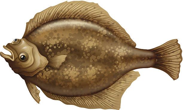 Psettodes Erumei Flounder Illustration of the Psettodes Erumei Flounder bristle worm stock illustrations