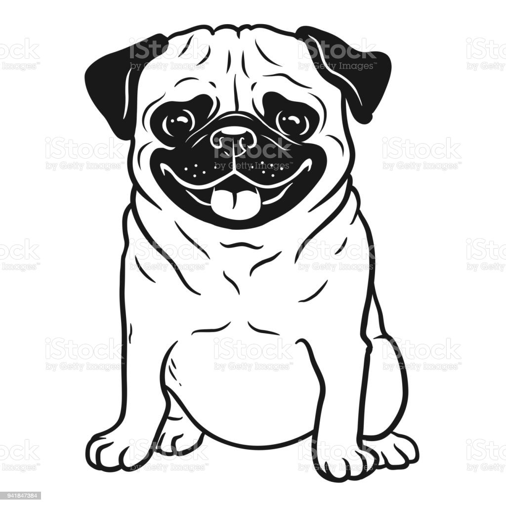 Ilustración De Retrato De Pug Perro Blanco Y Negro Dibujado