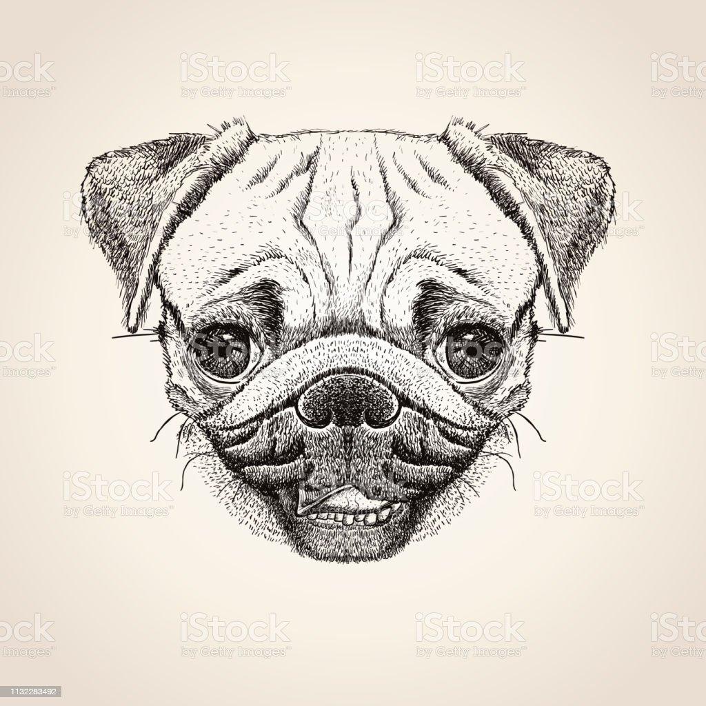 Pug dog head, hand drawn illustration, cute pug dog graphic portrait