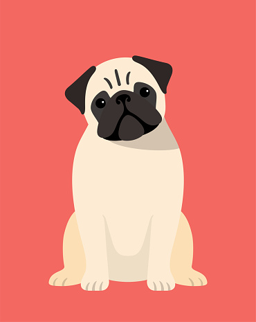 pug dog is sitting in the front, looking at you with its head tilted.