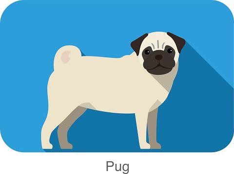 Pug, dog standing flat icon design