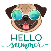 Pug dog wearing mirror sunglasses with palm trees reflection, with Hello Summer text vector illustration. Funny humorous lifestyle, summer holidays, resort, tropical vacation theme design element.