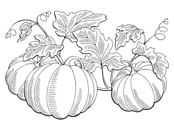 Royalty Free White Pumpkin Clip Art, Vector Images ...