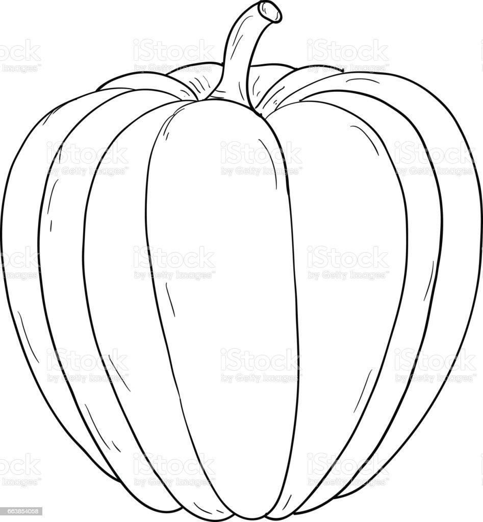 Contour Line Drawing Pumpkin : Pumpkin hand drawing sketch contour outline stock vector