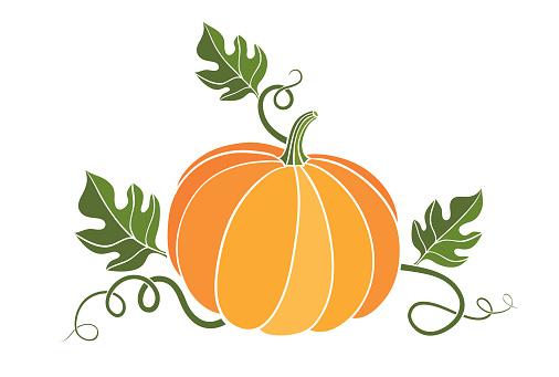 pumpkin. harvesting. natural food. colored vector illustration on white