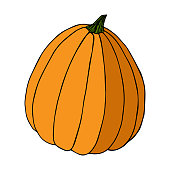 Pumpkin in color sketch black line isolated on white background vector illustration for decoration and design