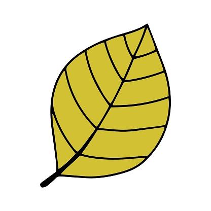 Pumpkin, leaf, acorn, mushroom. Vector doodle element.
