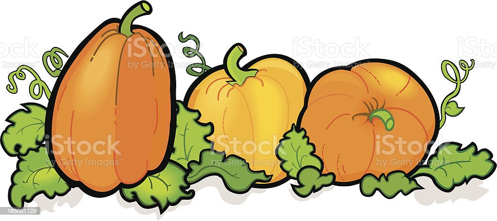 pumpkin patch stock vector art more images of autumn 165081129 rh istockphoto com pumpkin patch clipart black and white pumpkin patch sign clipart