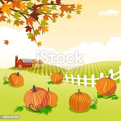 Pumpkin patch in autumn.