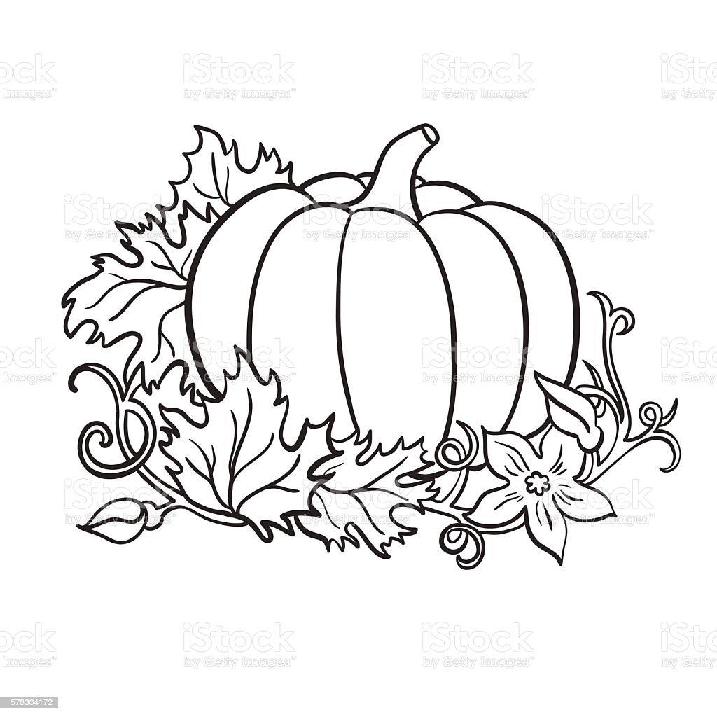 Pumpkin Vector Drawing Isolated Outline Vegetable With ...