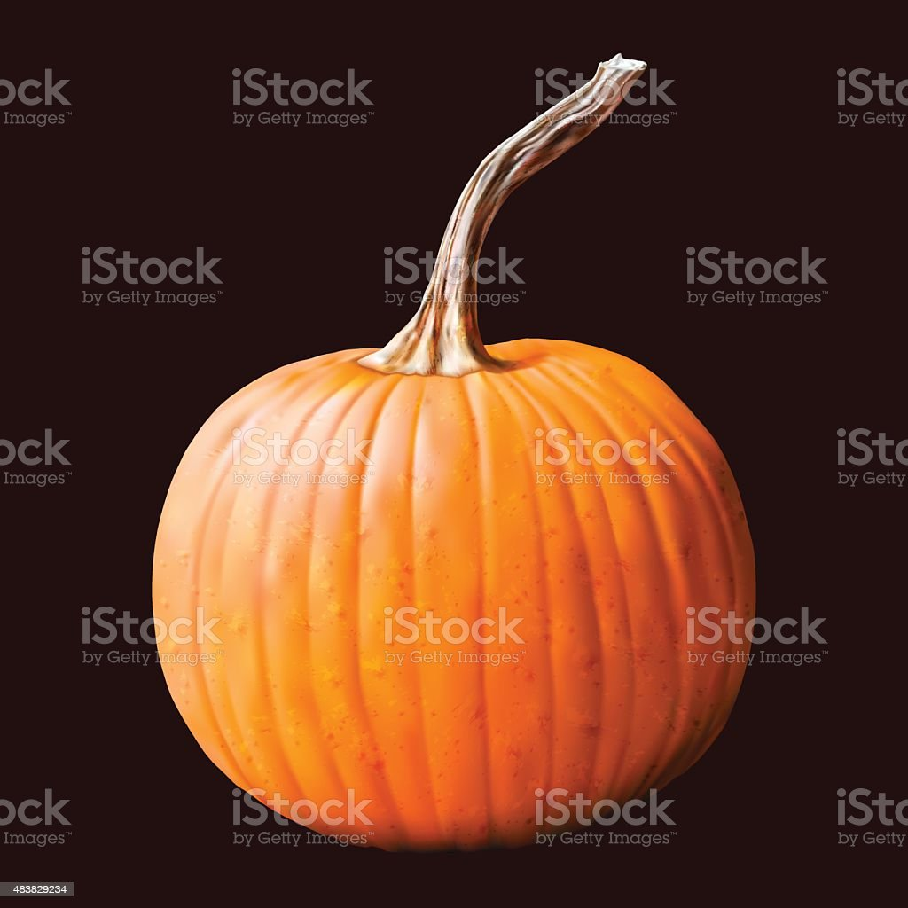 Pumpkin vegetable on dark background. vector art illustration