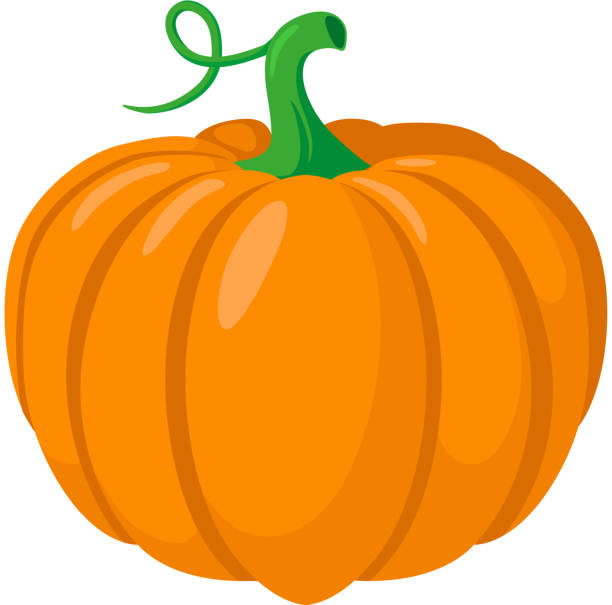 Pumpkin vegetable. Colorful design element isolated on white. Eps 10 vector illustration. pumpkin stock illustrations